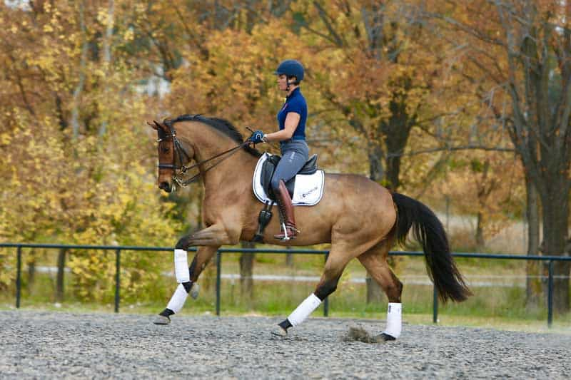 Sale preparation for dressage horses
